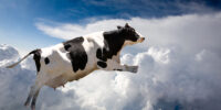 A Flying Cow