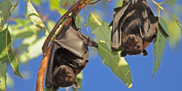 Bats and Viruses – level 2