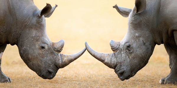 A new way to save rhinos – level 3