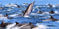 People kill dolphins